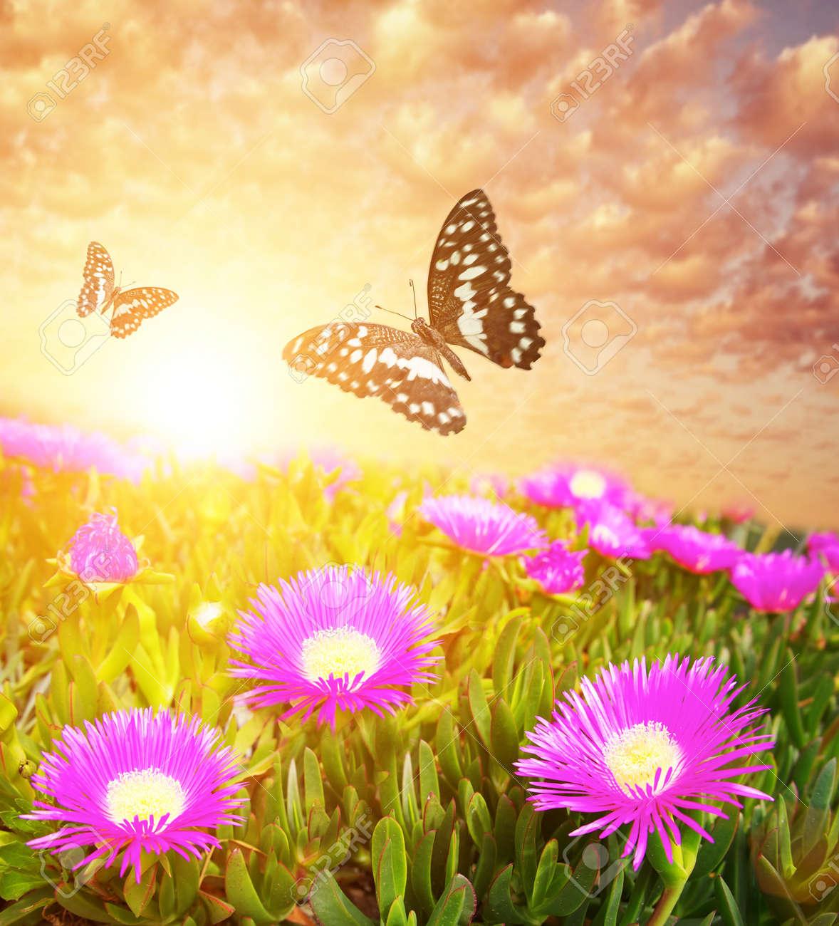 Las Mariposas Más De Campo De Flores Fotos Retratos Imágenes Y