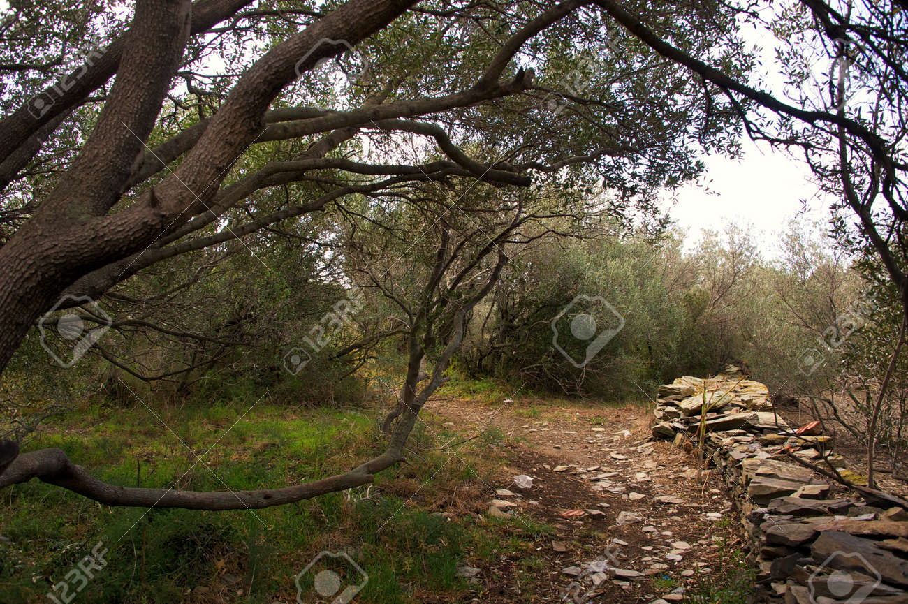 Path in a forest Stock Photo - 14104479