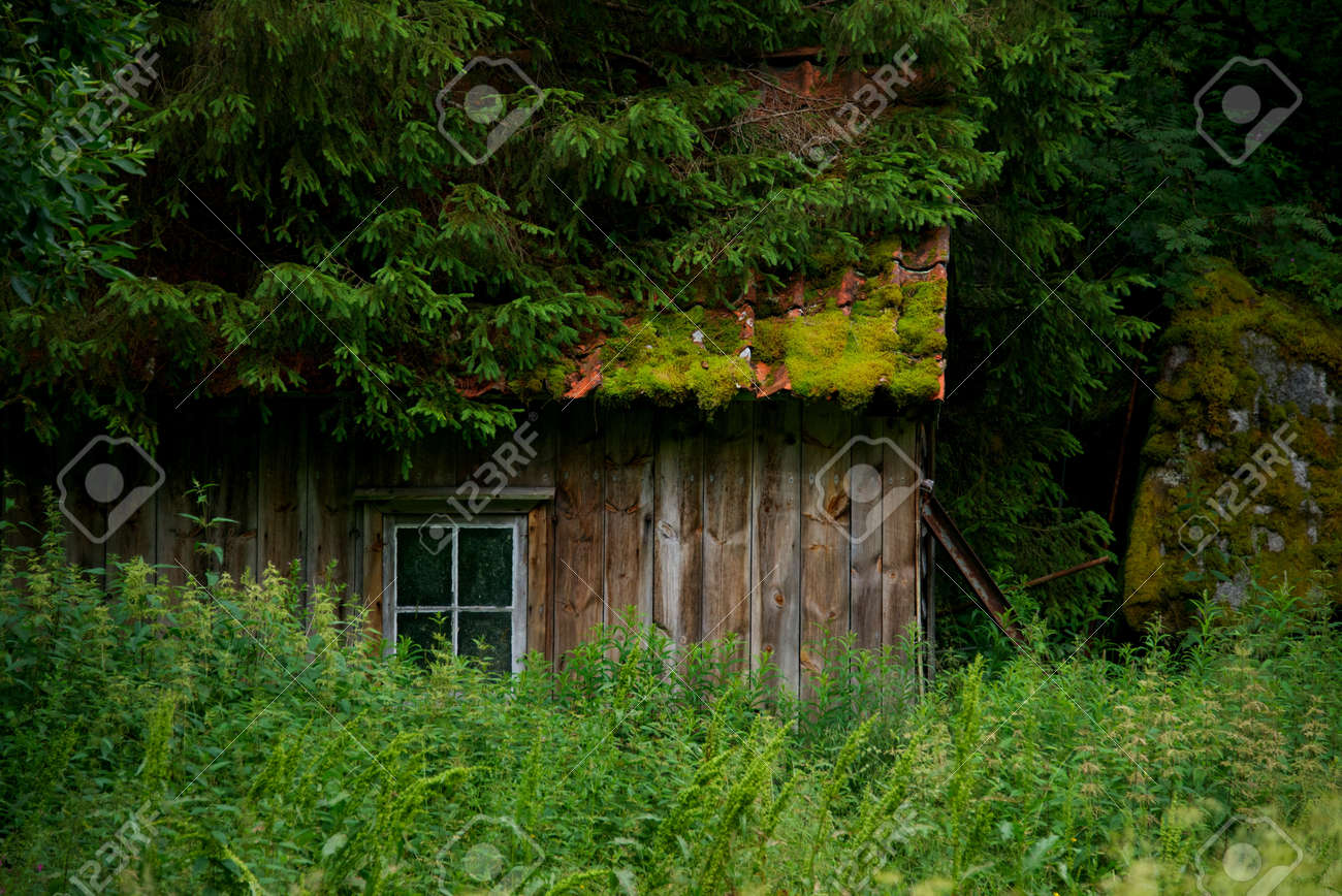 Old wooden house in forest stock photo 14700212