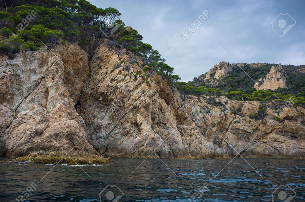 Trees growing on rocky seashore Stock Photo - 17070888