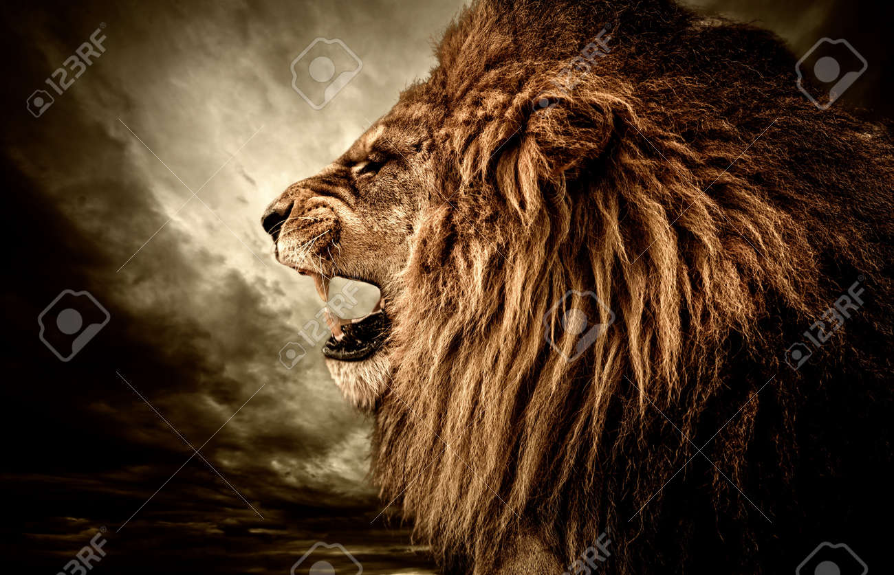 Roaring lion against stormy sky - 17928135