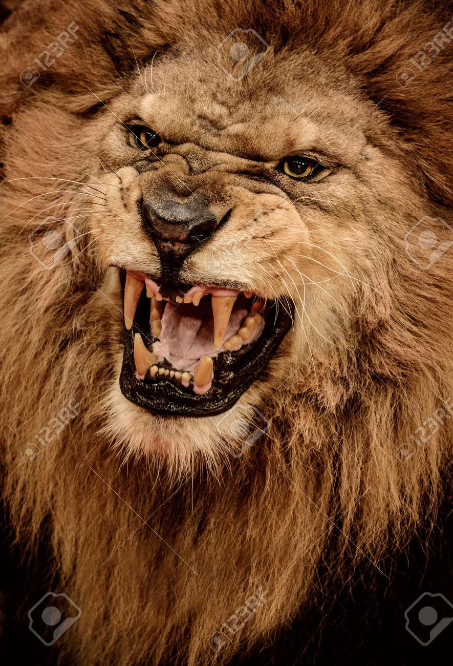 17928139-Close-up-shot-of-roaring-lion-Stock-Photo-roar.jpg