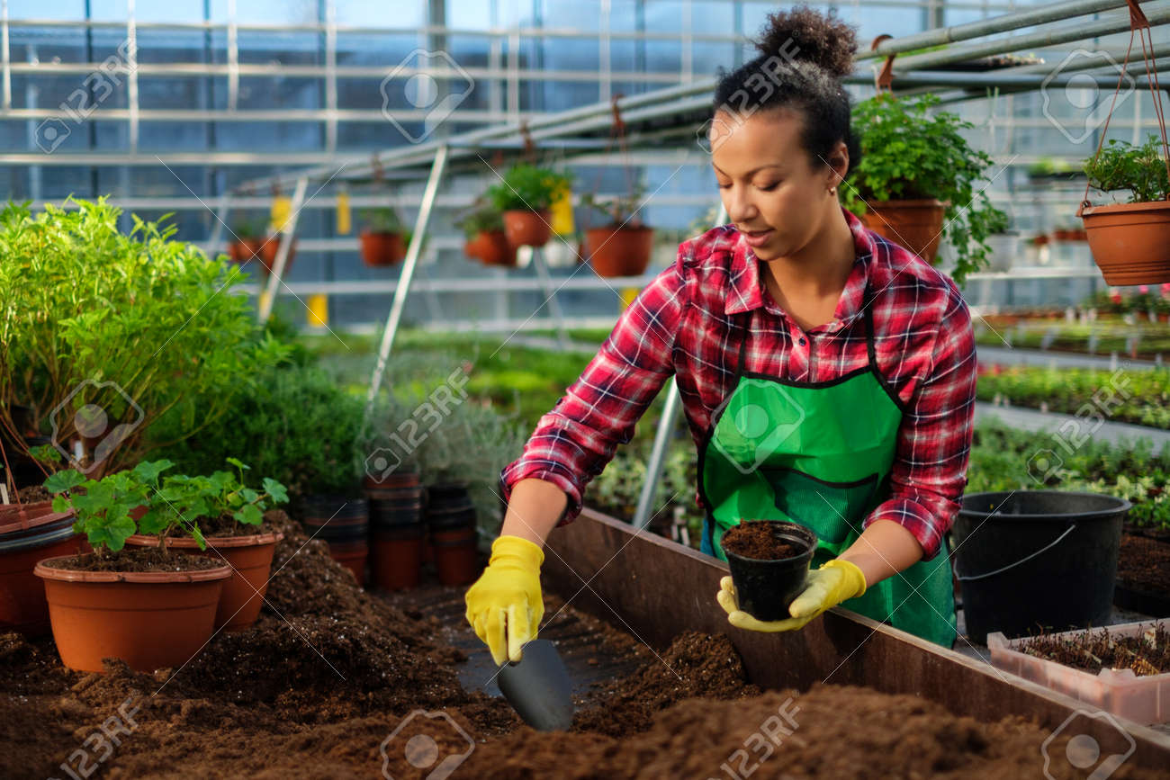 Black Woman Working In A Botanical Garden Stock Photo, Picture And ...