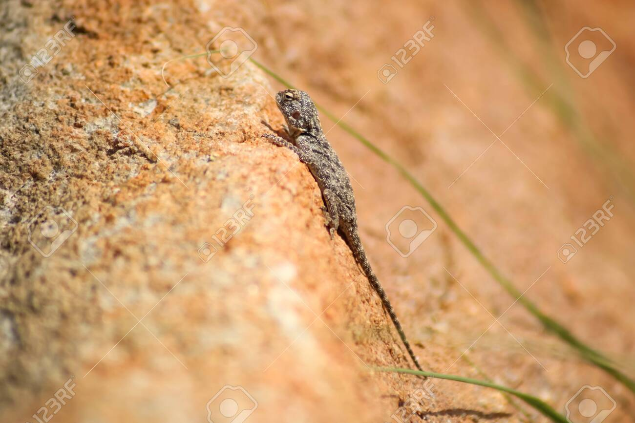 exotic gecko warming up on a sunny day - 142518534