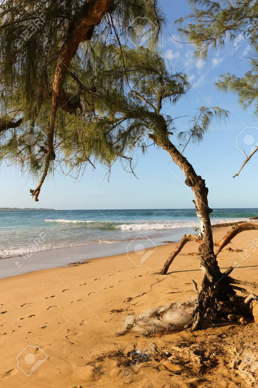 old tree at a lonely beach without people - 142518535