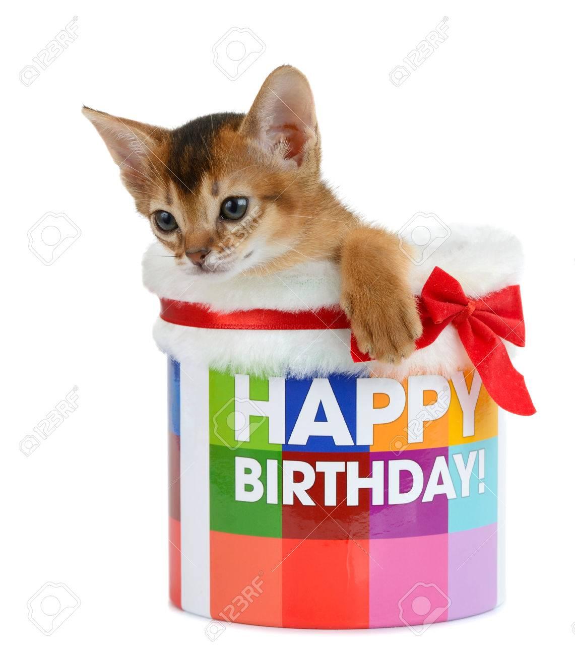 kitten sitting in a happy birthday bucket isolated on white