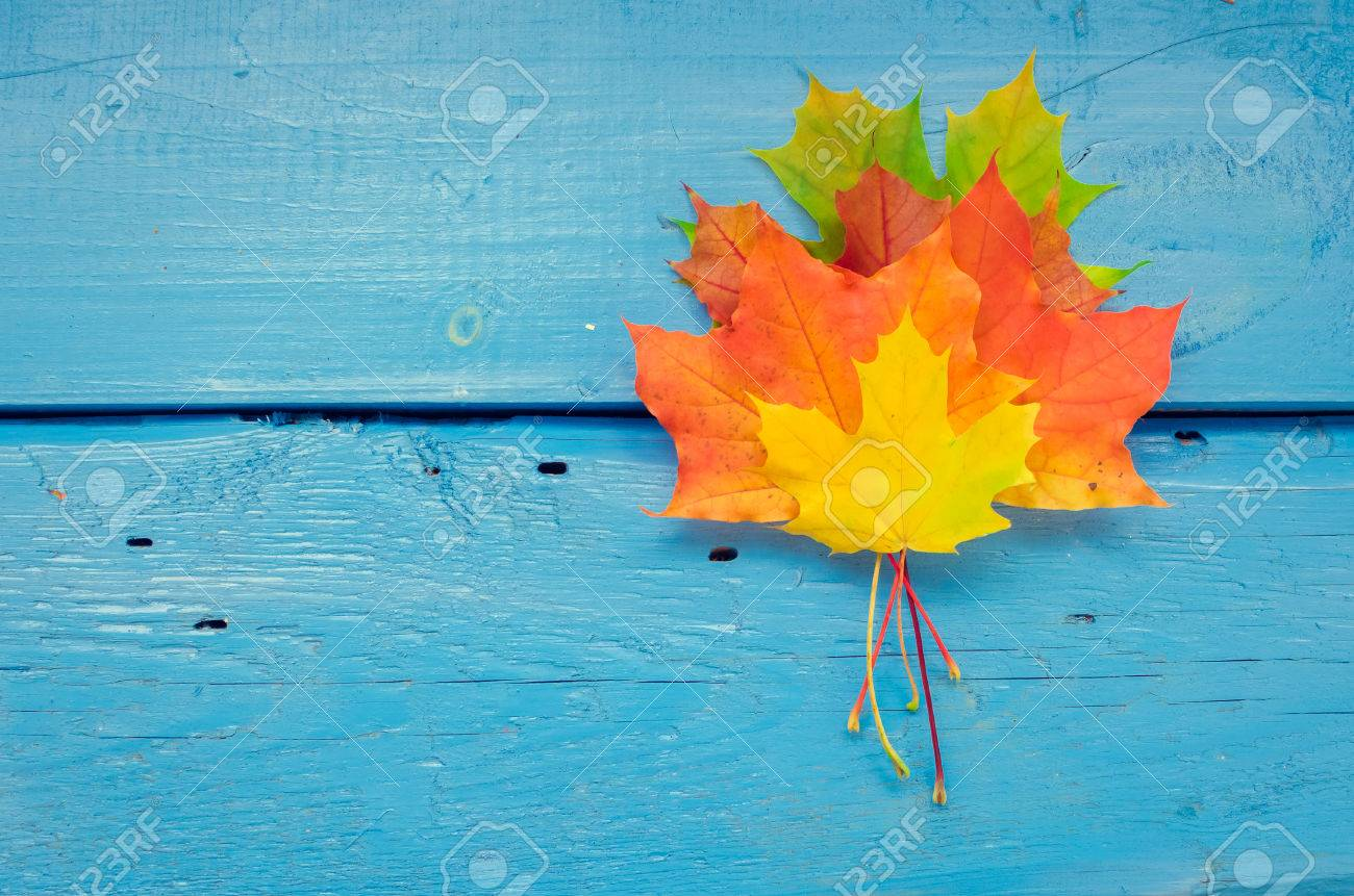 Autumn Background With Colorful Fall Maple Leaves On Blue Rustic Wooden Table Place For Text