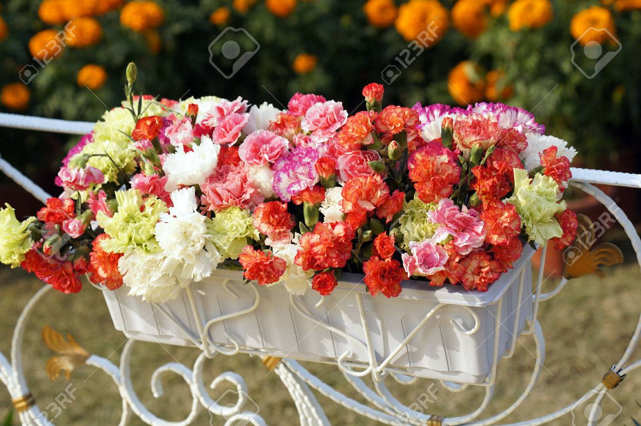 Beautiful Potted Flowers Stock Photo Picture And Royalty Free Image