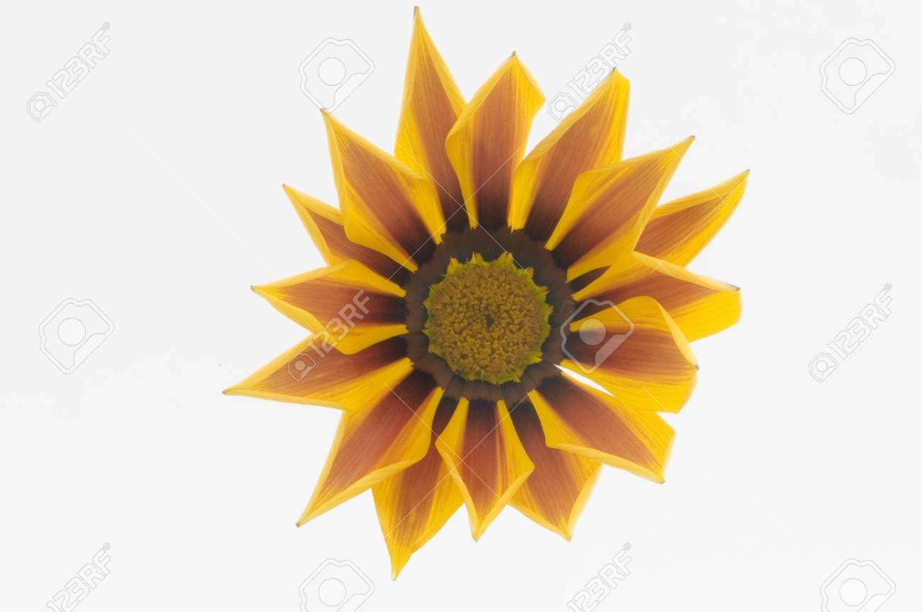 flower colors on white background Stock Photo - 10616208