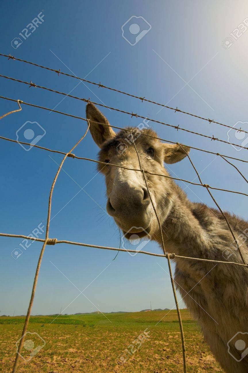 Young donkey caught by a wide angle lens Stock Photo - 4669961