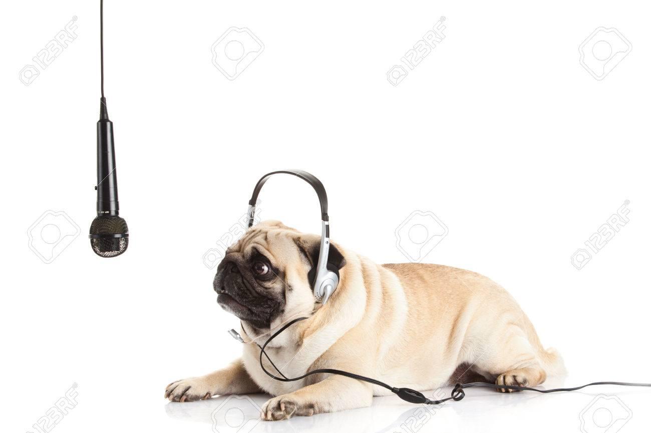 pug dog with headphone isolated on white background callcenter Stock Photo - 23559511