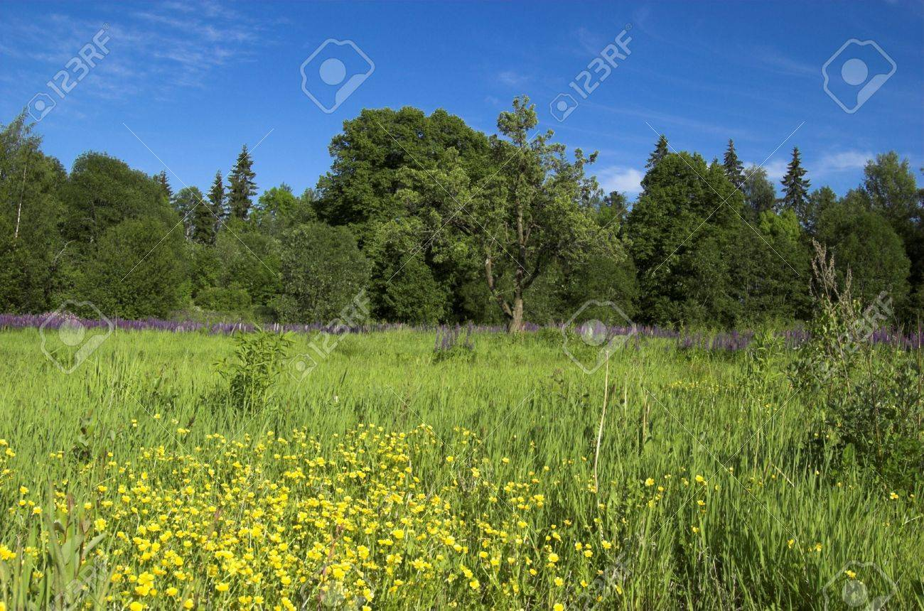 A Landscape with a green field wil a lot of yellow winter aconites spread across it. Stock Photo - 3263683