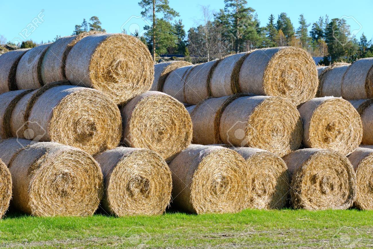 Multiple hay bails arranged in pyramids, seen somewhat from side. Stock Photo - 3571318