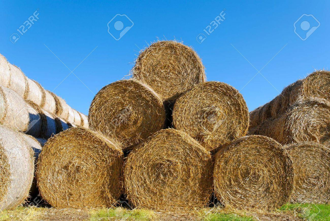 A pyramid of 6 hay bails, lit by high autumn sun. Stock Photo - 3571319