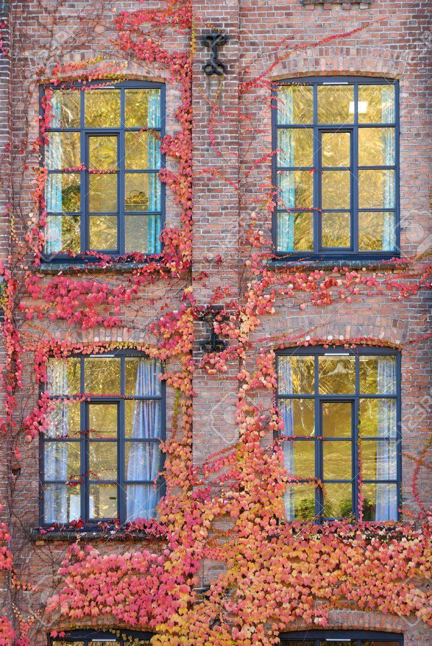 Ivy covered brick wall with four windows. Stock Photo - 3736869