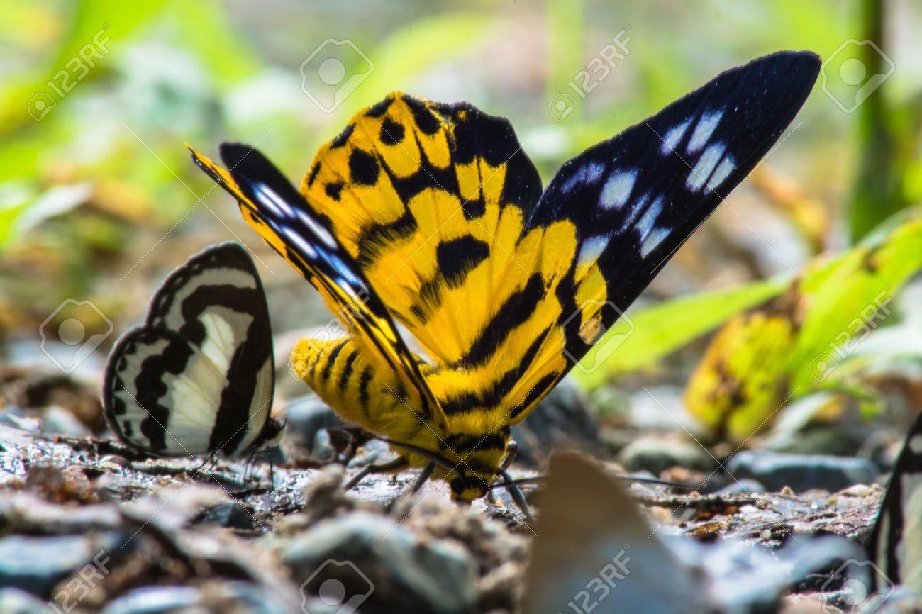 Schwarzer käfer mit blauen flügeln