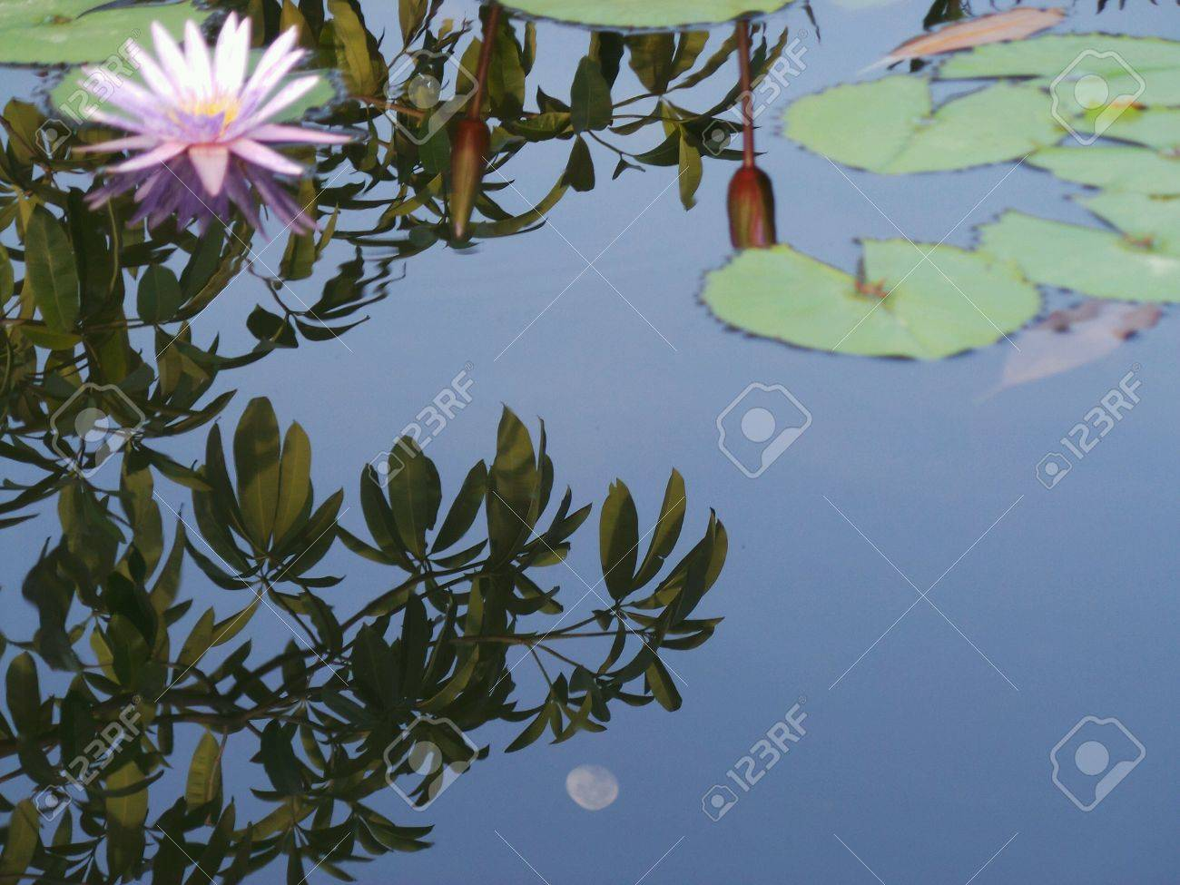 Reflections of moon and tree in lotus pond stock photo picture and reflections of moon and tree in lotus pond stock photo 23917222 izmirmasajfo