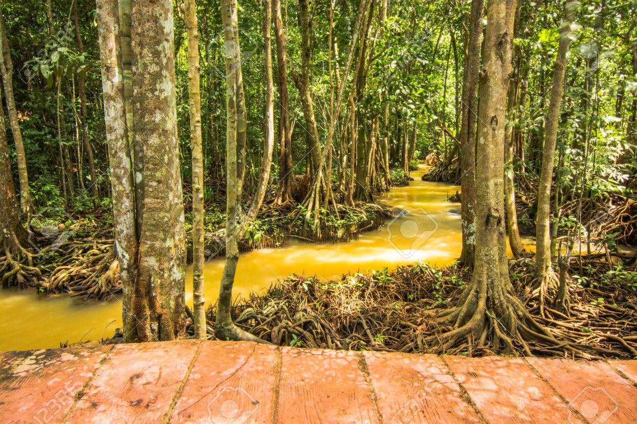 Tha Pom Klong Song Nam Mangrove forest conservation and tourist