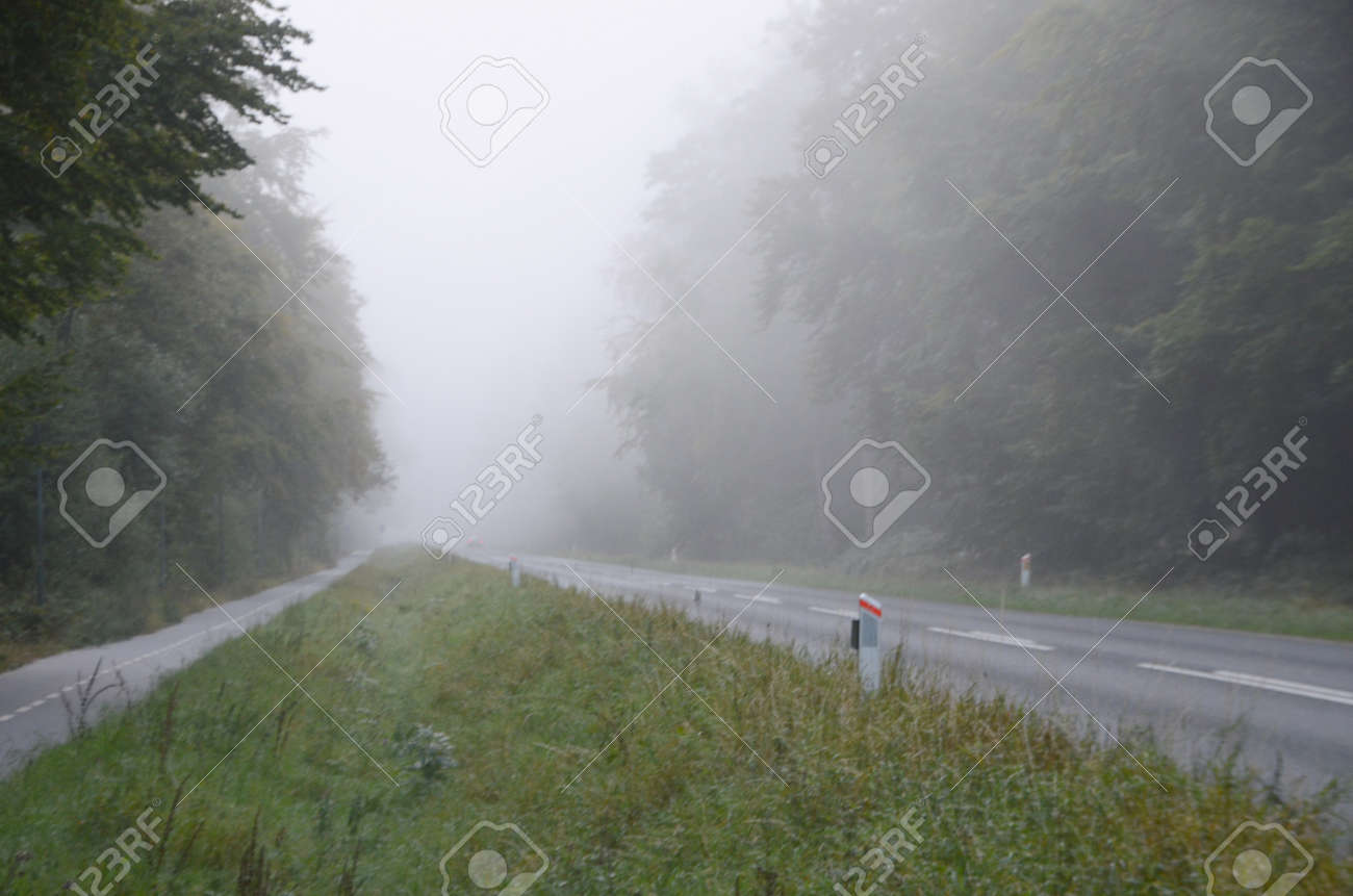 Road in a forest with morning fog. - 157104467