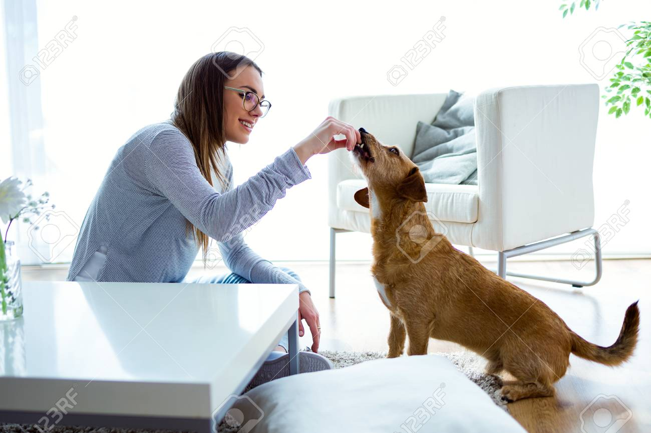 Portrait of beautiful young woman with dog playing at home. - 111587645