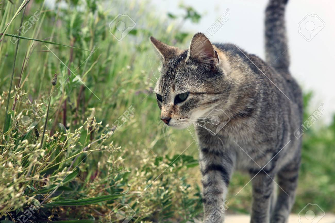 green-eyed cat Stock Photo - 9652143