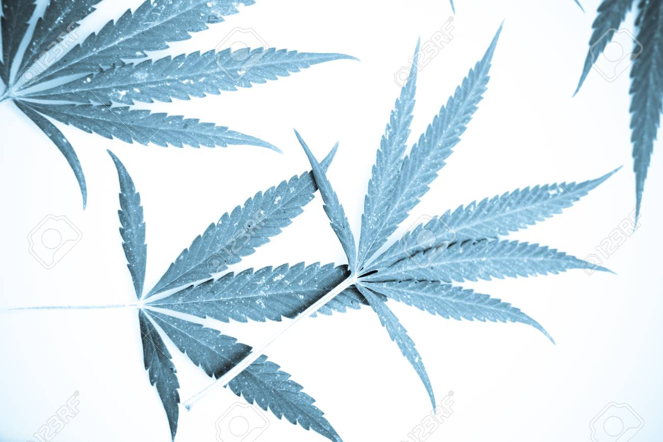 Marijuana. Stock Photo - 15209996