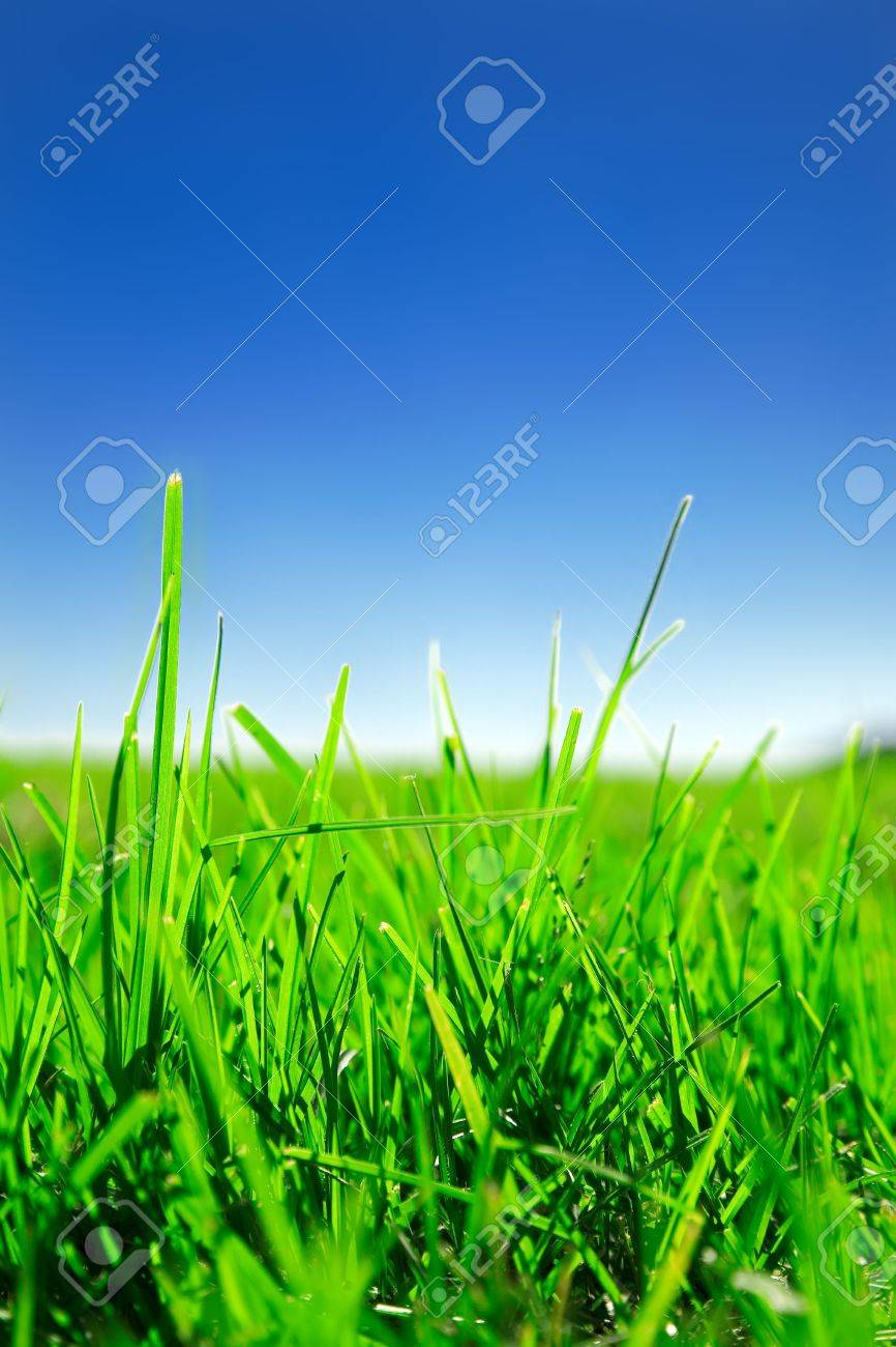 Close up of green grass under clear blue sky Stock Photo - 3307855