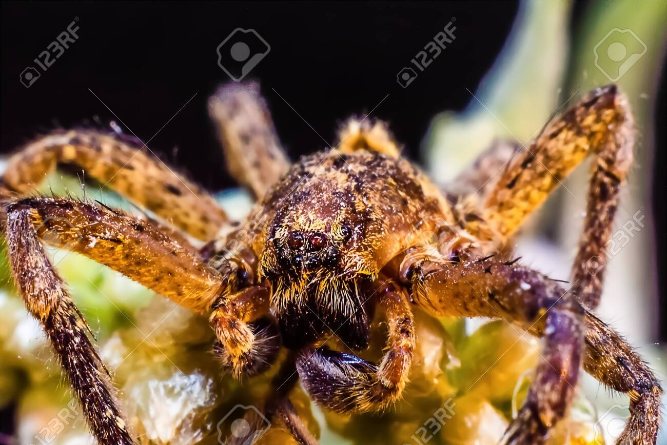 Macro photography of a spider in the foreground - 144851634