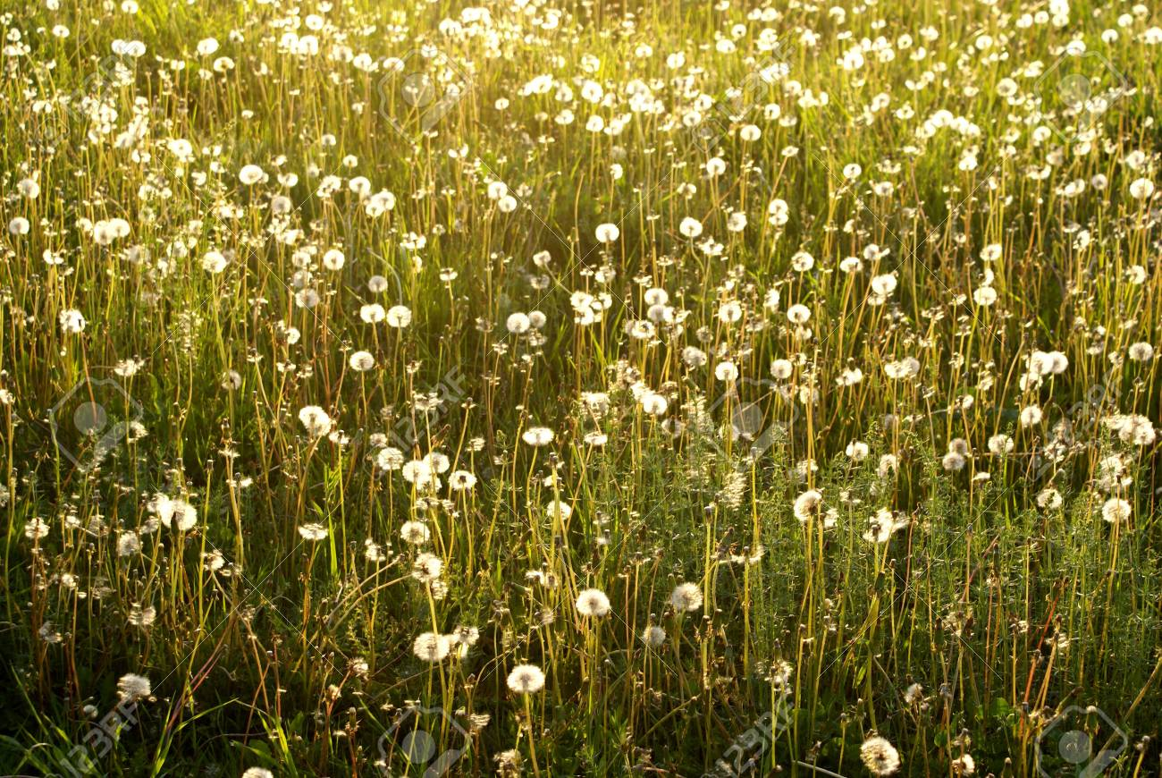 field of the  flowers sun grass Stock Photo - 1876158