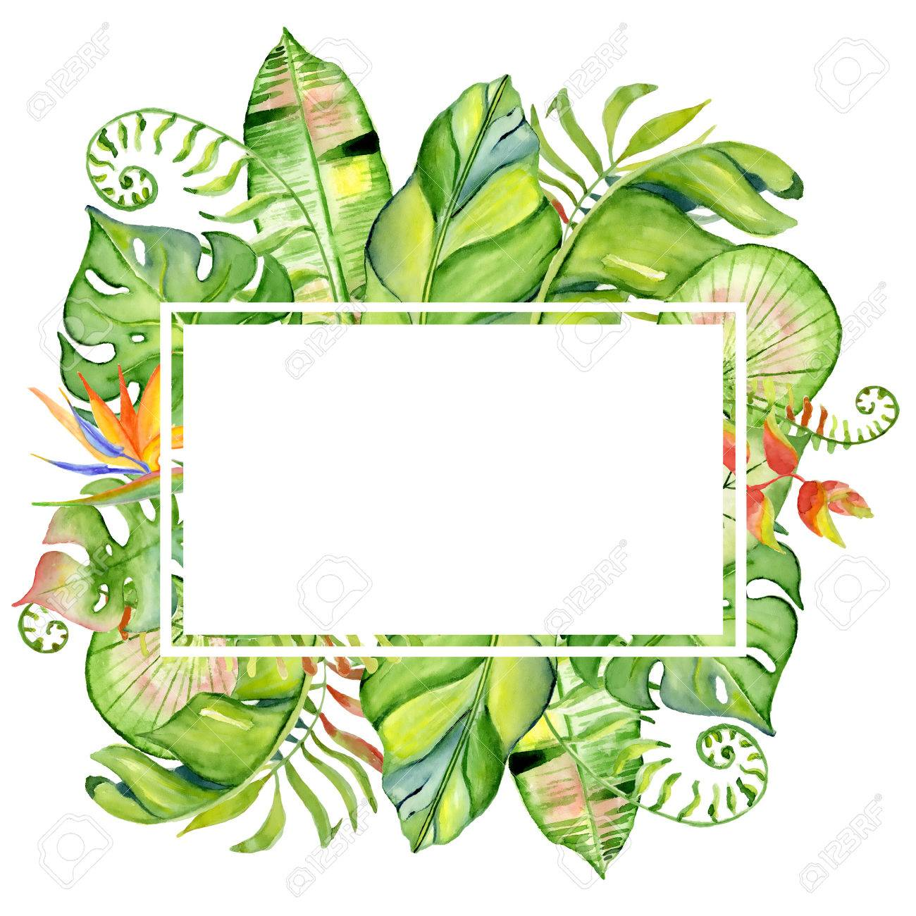Watercolor Tropical Leaves Frame Hand Drawn Plants Arrangement Stock Photo Picture And Royalty Free Image Image 81523239 Vector tropical jungle frame with gold palm trees and leaves on white background. watercolor tropical leaves frame hand drawn plants arrangement