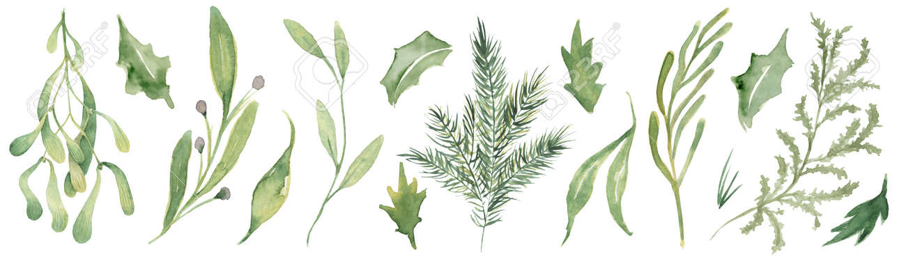 Watercolor pine brunches and leaves hand drawn christmas decor illustration - 154865536