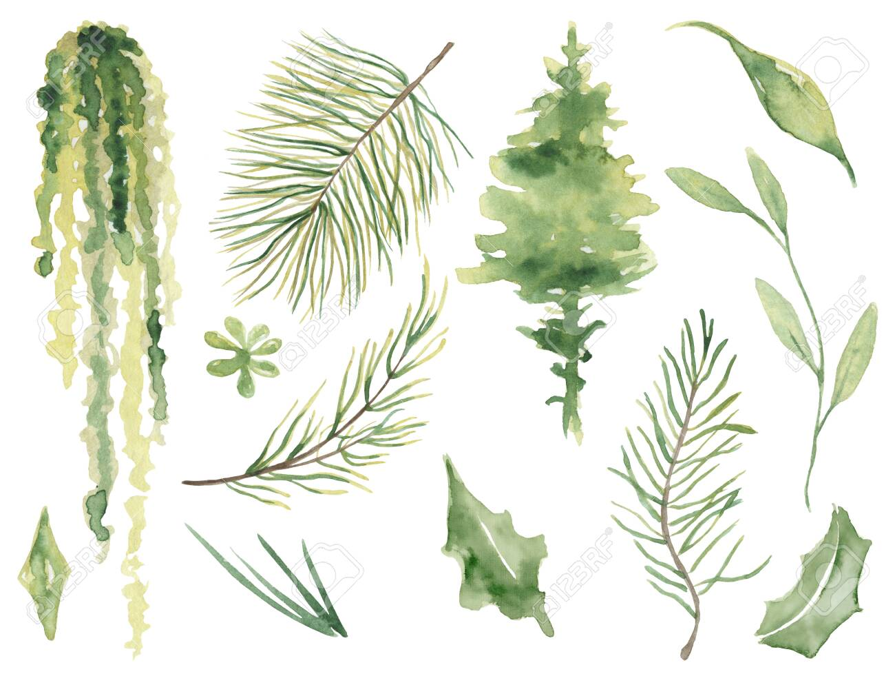 Watercolor pine brunches hand drawn christmas decor illustration - 154865664
