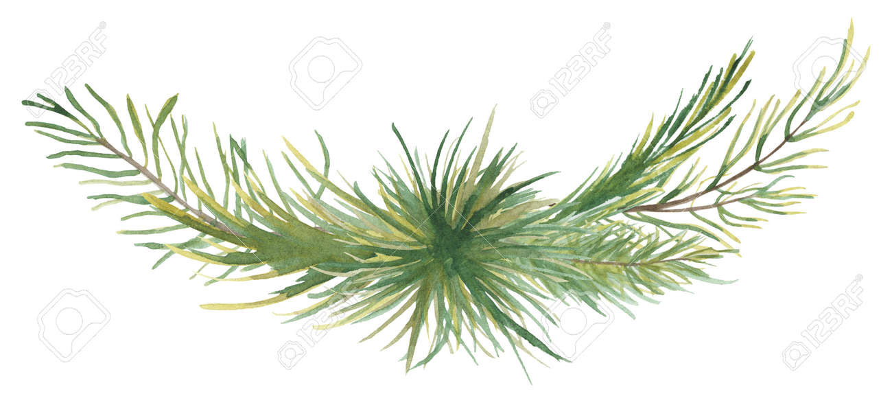 Watercolor Christmas floral bouquet with pine tree branches decor illustration - 154972803