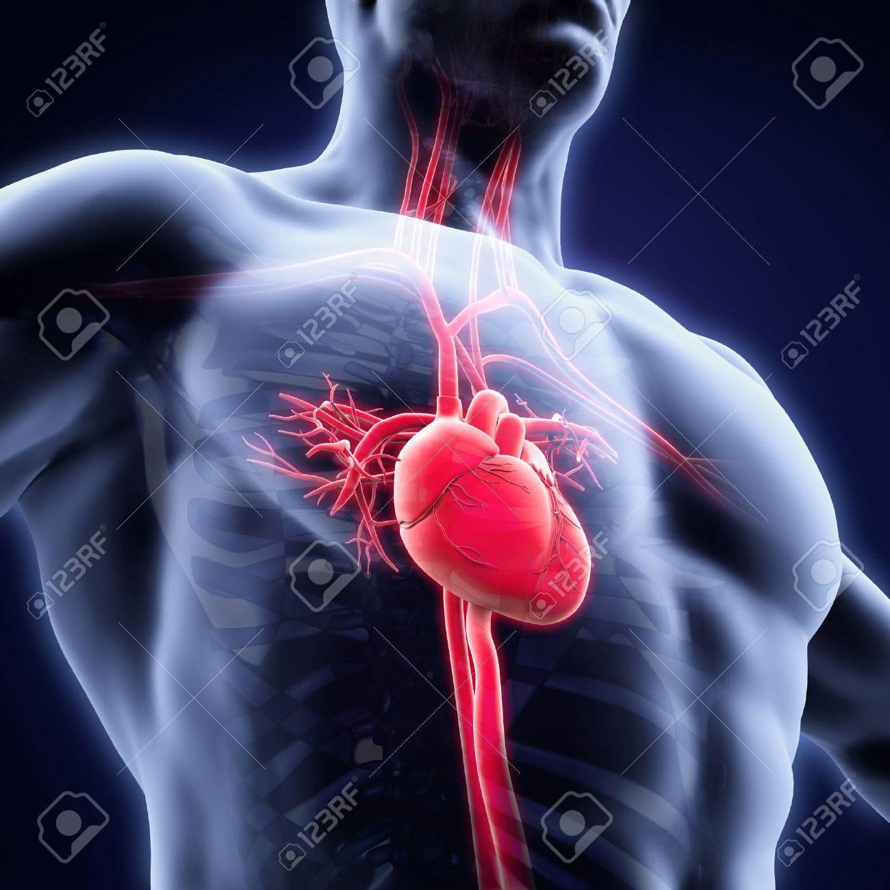 Ungewöhnlich Menschliche Anatomie Und Physiologie Laborhandbuch 12 ...