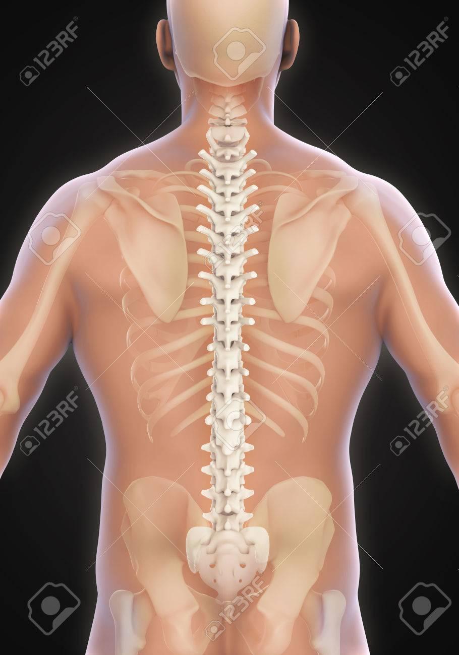 Beste Männliche Anatomie Bilder Fotos Ideen - Anatomie Von ...