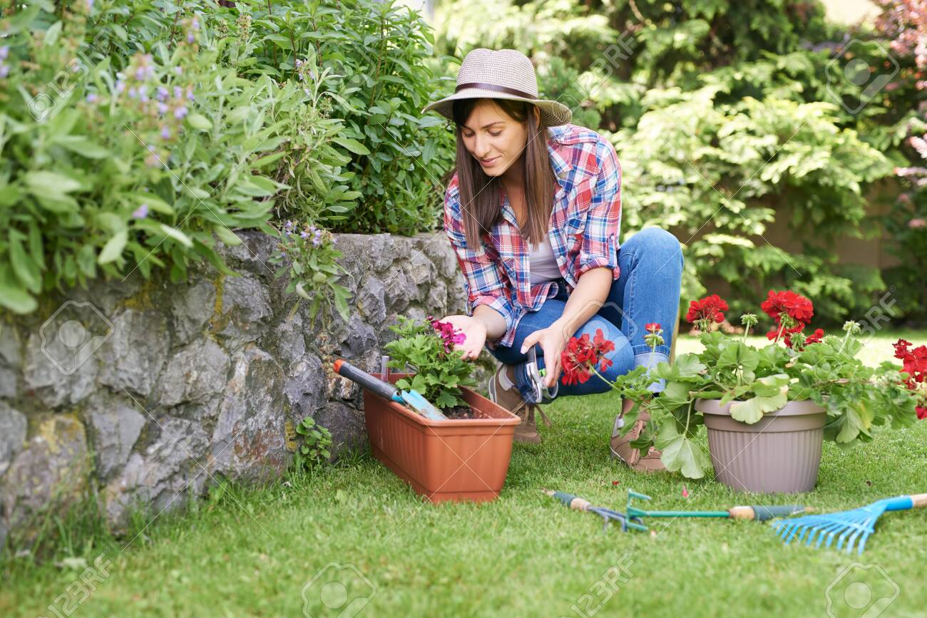 Cute Caucasian brunette with hat on head and in working clothes crouchig and pruning flowers while crouching in backyard. - 125677066