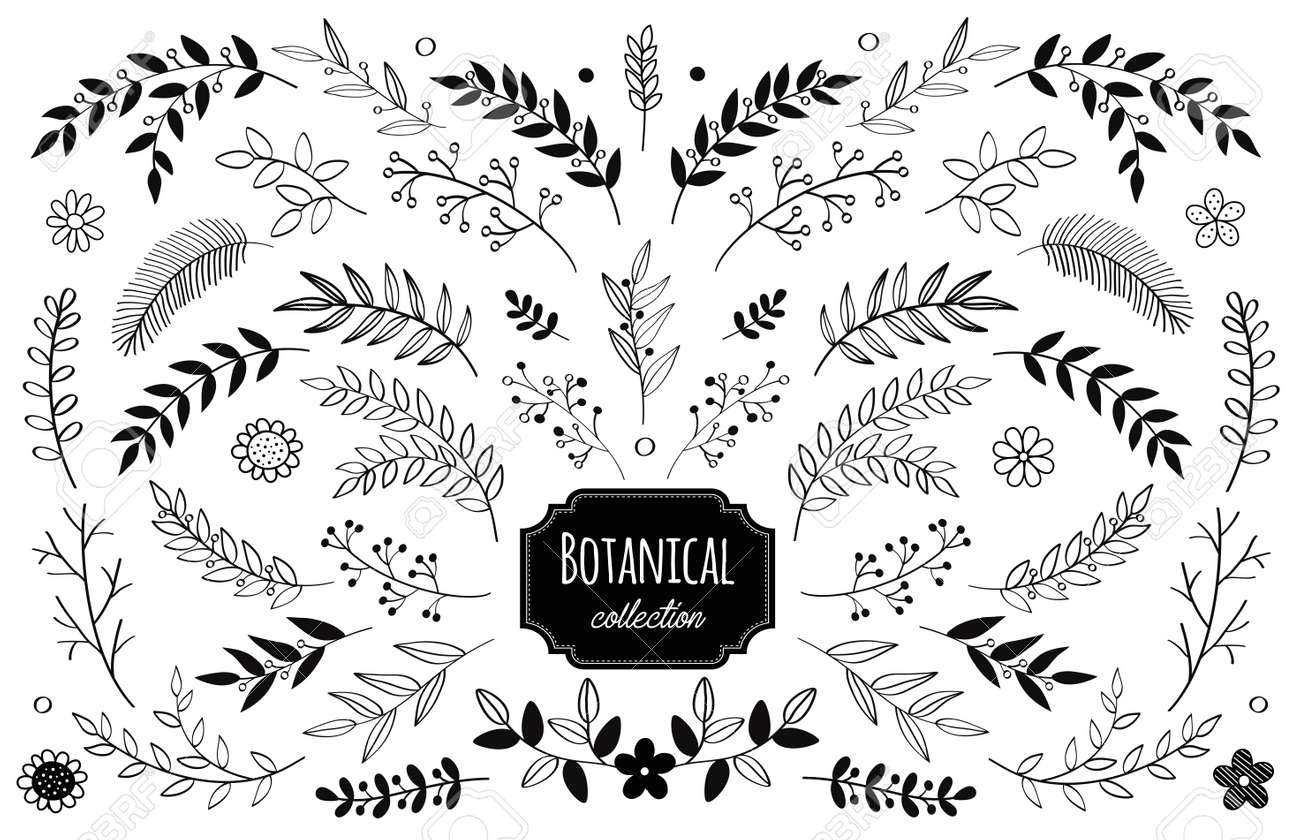 vector floral elements. Branches and leaves. Herbs and plants collection. Vintage botanical illustrations and floral wreaths. - 151723256