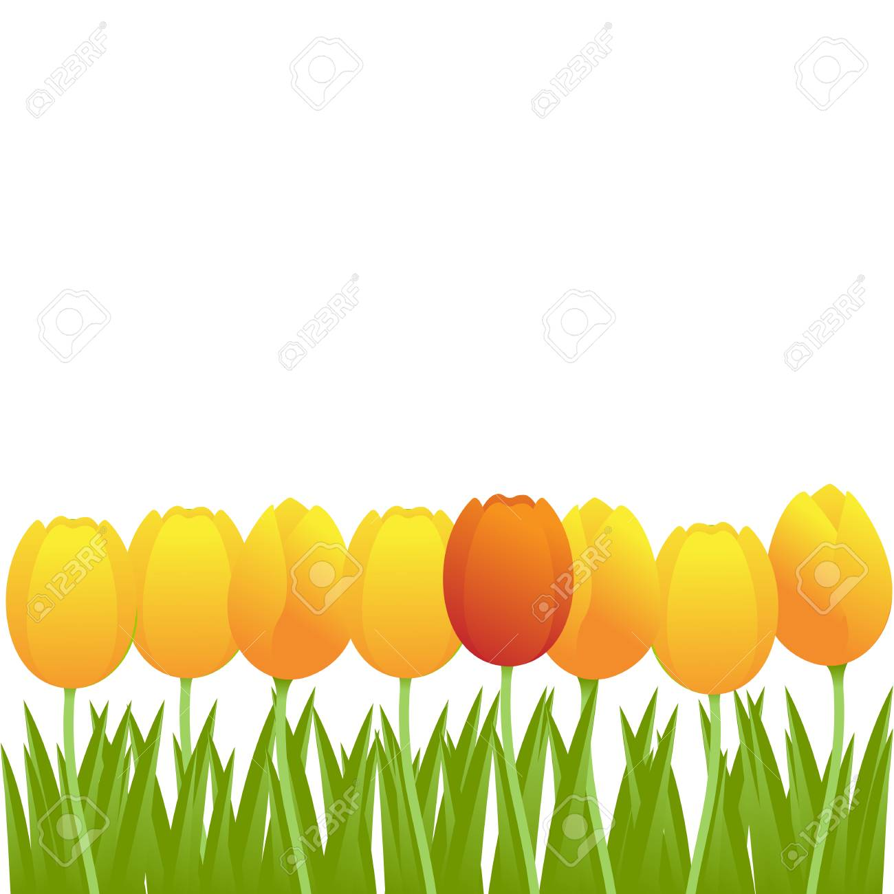 Bright yellow and single red tulips isolated on white background. Vector illustration. Stock Vector - 6559901
