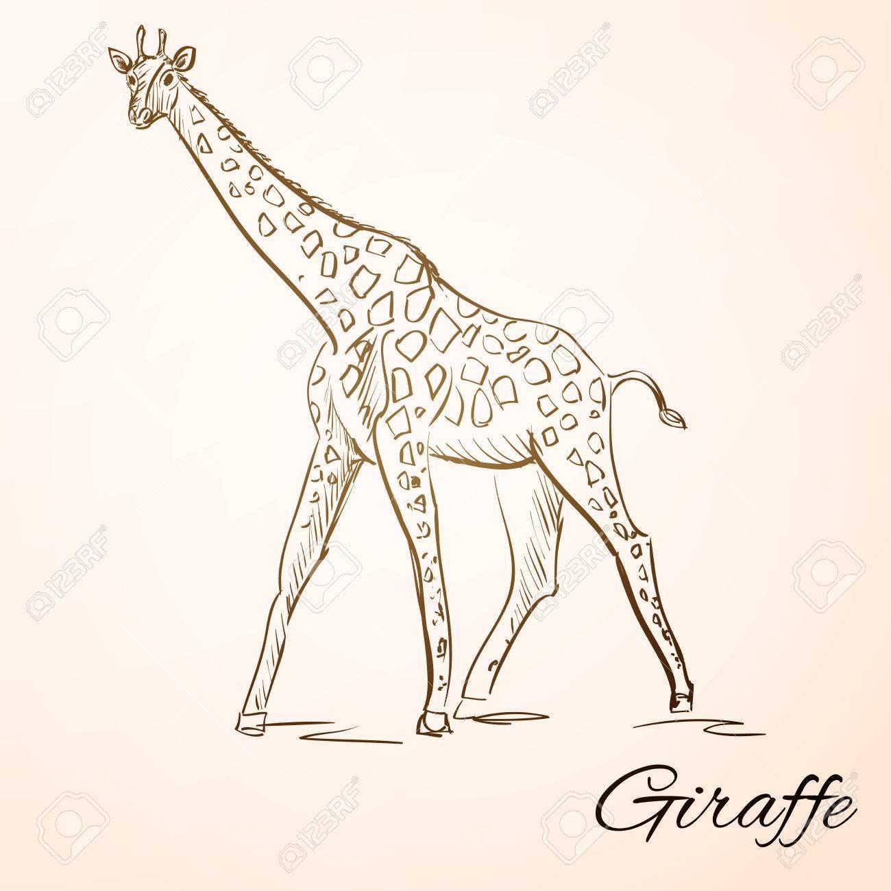 sketch doodle drawing giraffe vector illustration royalty free