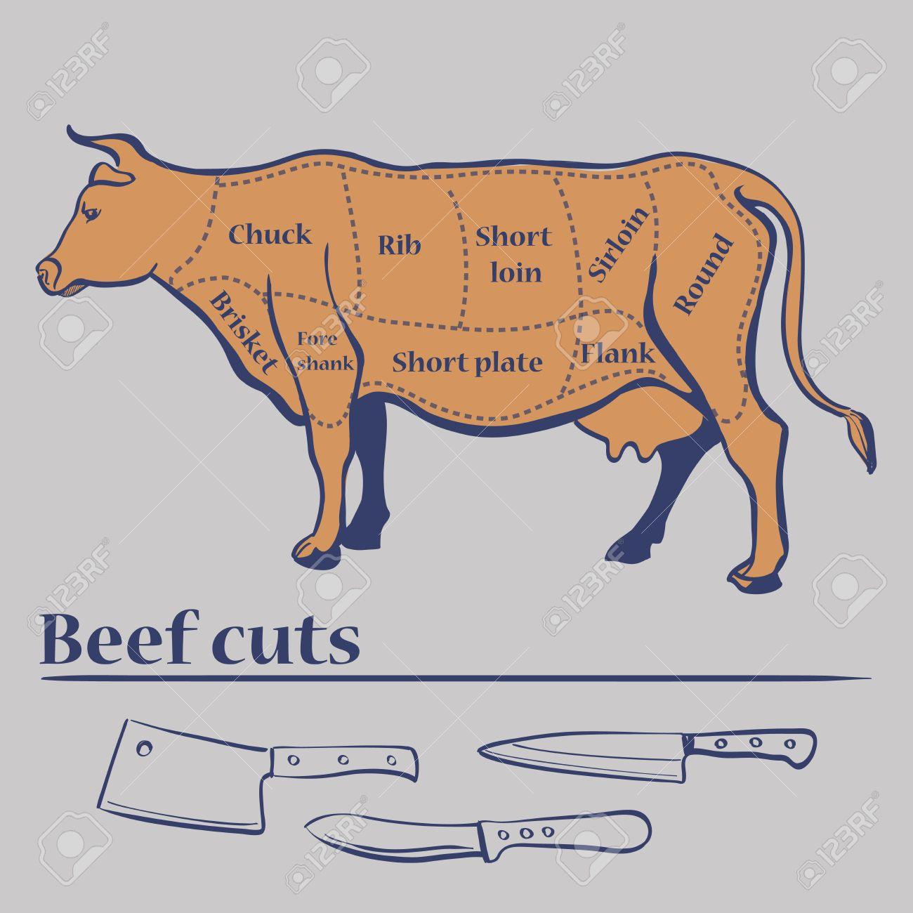 Vector Cuts Of Cow , Cuts Diagram. Excellent Vector Illustration ...