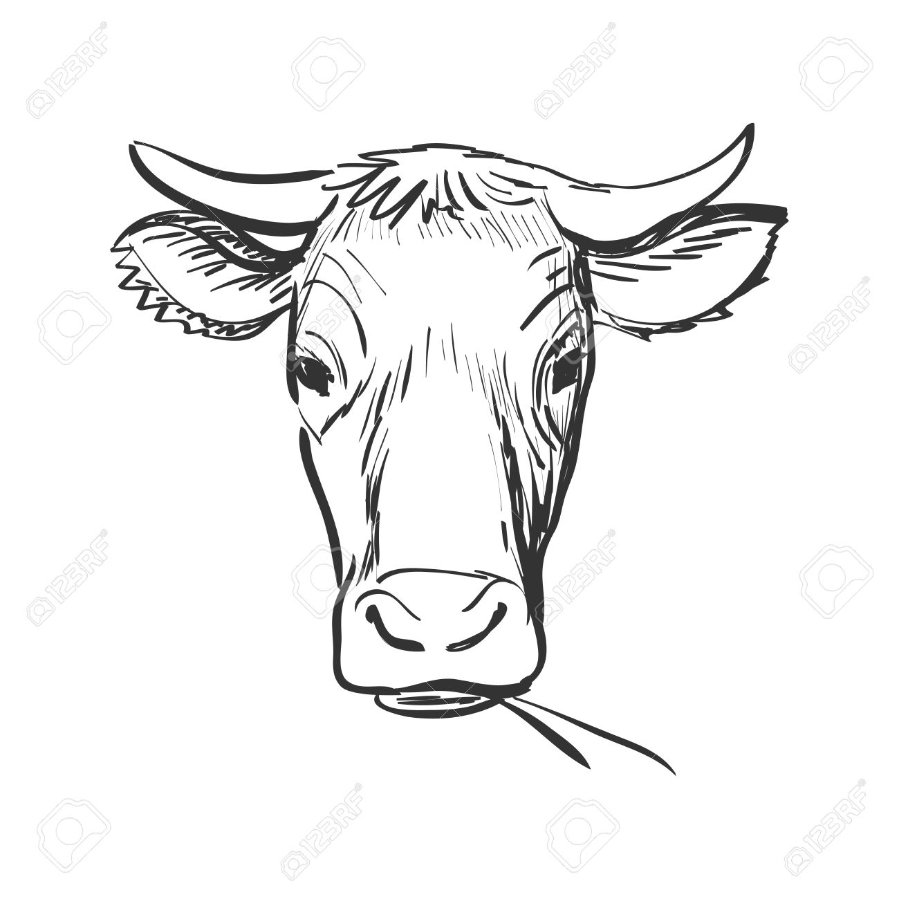 doodle cow, Cow skull sketch. Isolated in white background. Excellent vector illustration, EPS 10 - 46478958