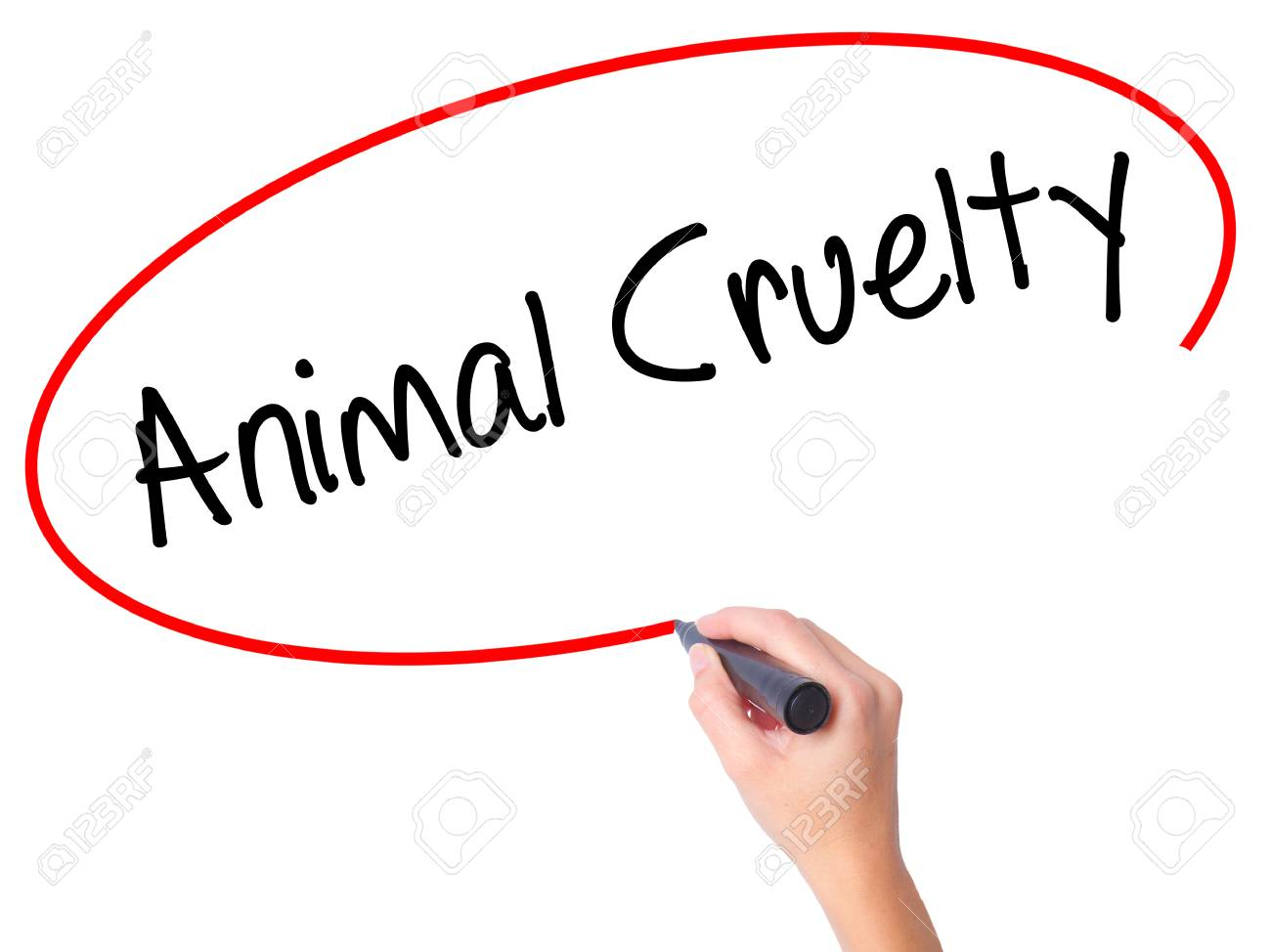 Women Hand Writing Animal Cruelty With Black Marker On Visual  Stock Photo  Women Hand Writing Animal Cruelty With Black Marker On Visual  Screen Isolated On White Business Technology Internet Concept Stock  Photo