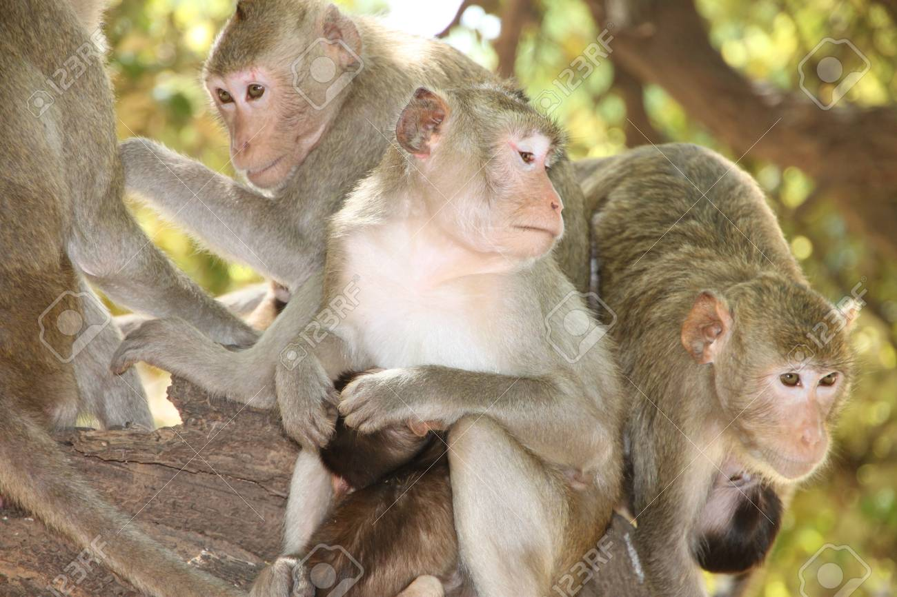 Long-tailed Macaque Stock Photo - 9857919