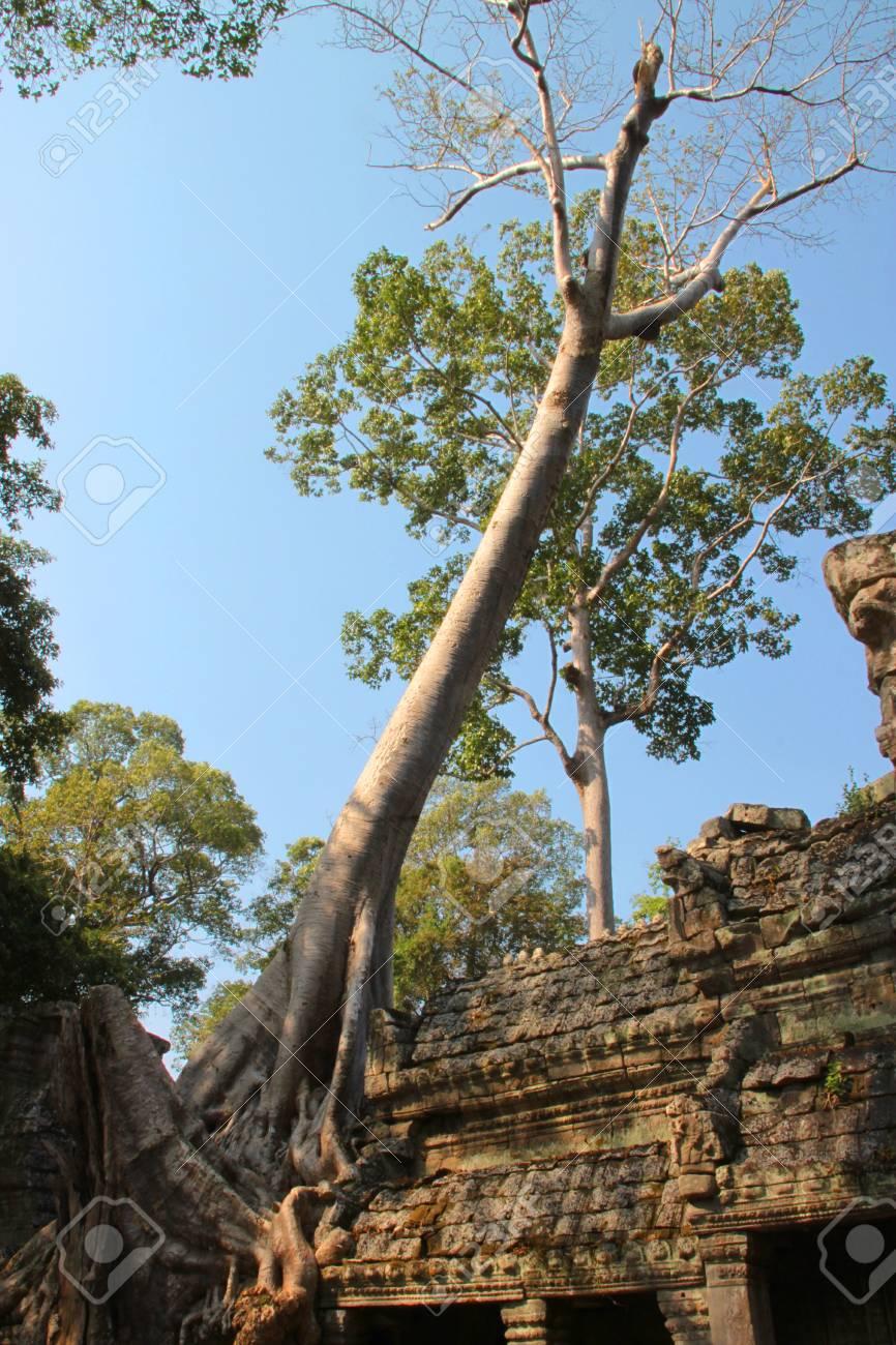 Tree on building in ancient Khmer architecture, Prasat Praeh Khan Stock Photo - 12628222
