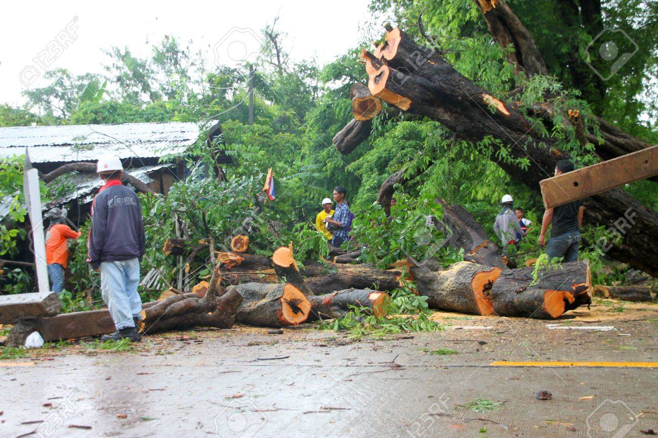 MUANG, MAHASARAKHAM - AUGUST 29 : Unidentified rescue teams are taking trees fallen down after storm damage away from road on August 29, 2012 at Bua Koh Village, Muang, Mahasarakham, Thailand. Stock Photo - 14998253
