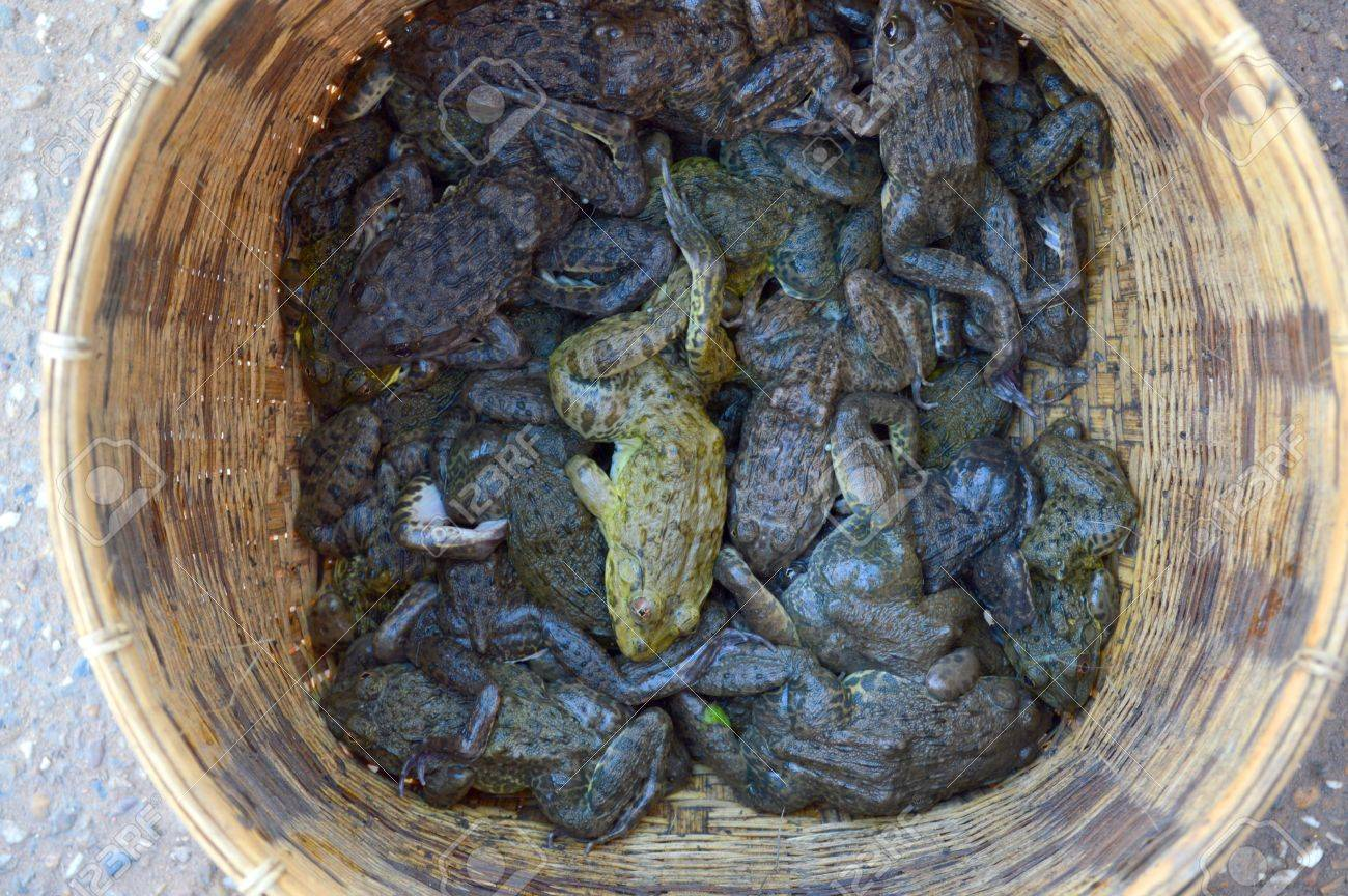 lots of frogs