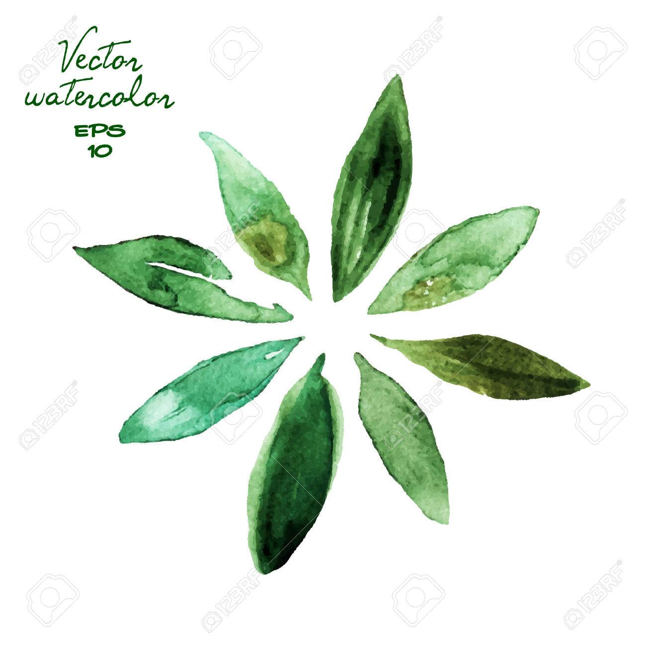 Set of green watercolor leaves - 43225014