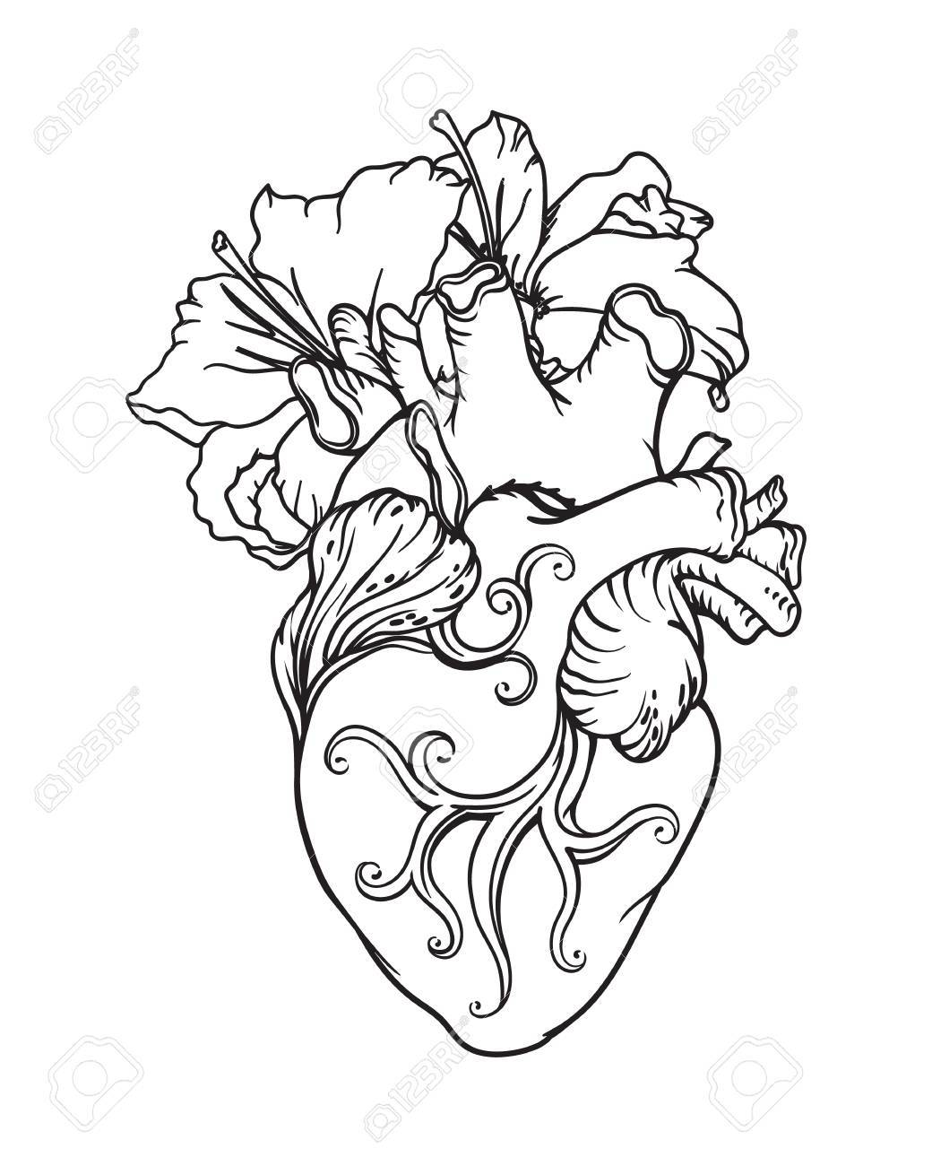 Stylized Anatomical Human Heart Drawing Heart With White Lilies