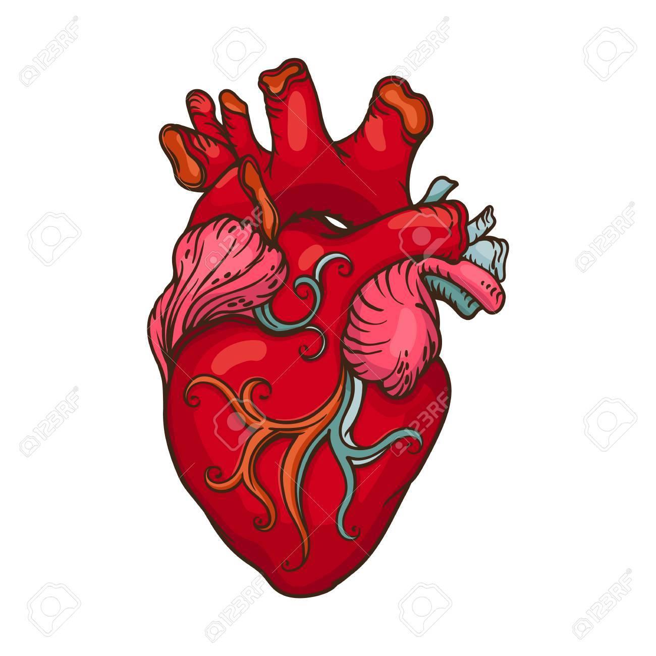 Dessin Coeur Humain dessin d'illustration stylisée de coeur humain. clip art libres de