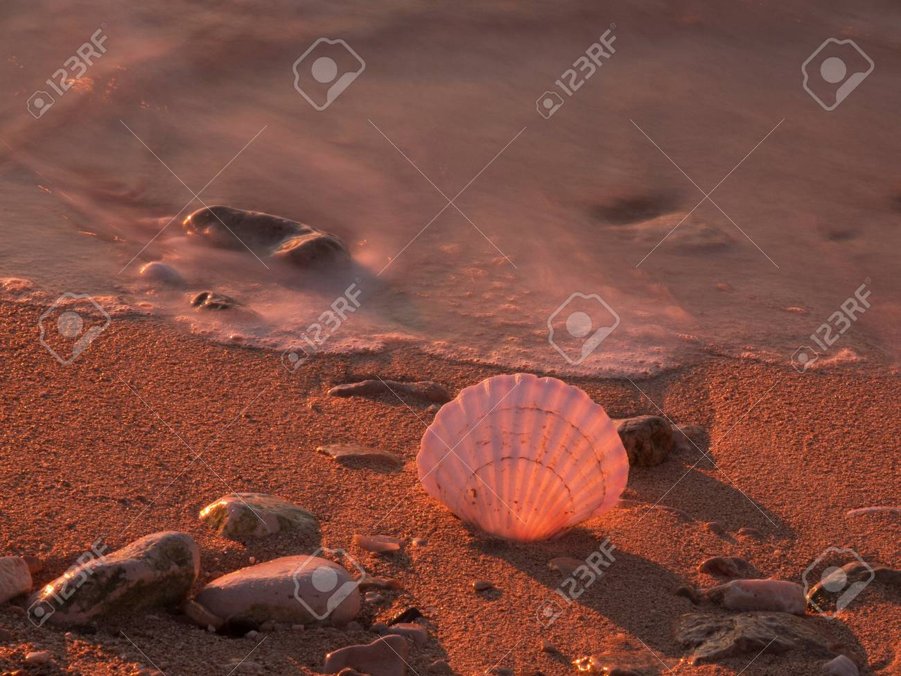 shell on the send beach in the golden sunset Stock Photo - 17069039